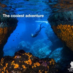 Standard Chartered: Immerse in the wonders of the deep blue sea in Andalusia