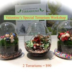 [Love In A Bottle] Valentine's Terrarium Workshop. Only this weekend !  2 Terrariums ONLY $90 ! 11th Feb(Sat) ~ 12th Feb(Sun), 11am to 7pm