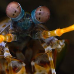 [Capitol Optical] Scientists are finding that one of Mantis Shrimp's abilities — incredible eyesight — has implications for people with cancer that are