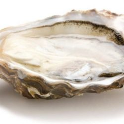 [The Beacon] Tonight only we are serving Aigue Marine Special Oyster!