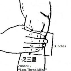 [Kin Teck Tong] Leg Three Miles- for Stomach ProblemsLeg Three MileThe Leg Three Miles (ST 36) acupressure point is commonly used