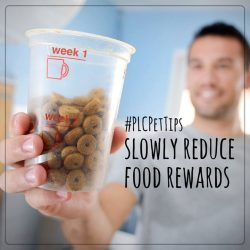 [Pet Lovers Centre Singapore] PLCPetTips - Gradually decrease the amount of food treat rewards over several weeks.