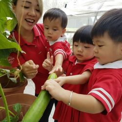[MindChamps Medical] Dear Moms & Dads, We are harvesting vegetables during this Special Welcome Day event.
