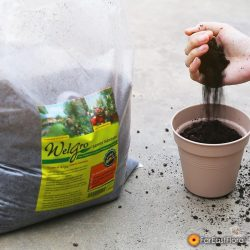 [Far East Flora] Tuesday's activity: Getting some potting done.