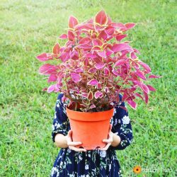 [Far East Flora] We say a plant sale is a great excuse to stock up on more houseplants!