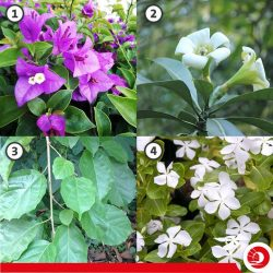 [OCBC ATM] Did you know that NParks has a Native Plant Squad that is responsible for showcasing a selection of our most