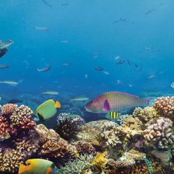 [DBS Bank] Diving at the Great Barrier Reef is exciting yet dangerous as you will need to watch out for prickly sea