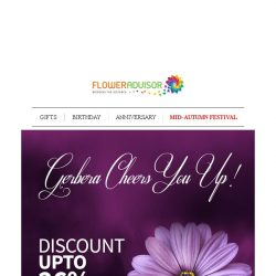 [Floweradvisor] Gerberas Never Missed a Point. Send Them Out with Up To 26% OFF