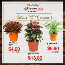 [Far East Flora] Grab a few pots of these vibrantly coloured plants back at a steal with our ongoing 52nd Anniversary Sale!