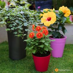 [Far East Flora] Gardening just got better with our great anniversary savings!