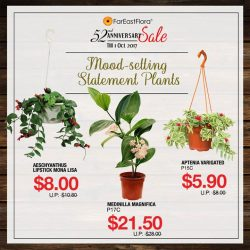 [Far East Flora] Set the mood right with statement plants!