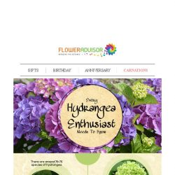 [Floweradvisor] FLOWERPEDIA: 6 Facts That You Might Not Know About Hydrangea