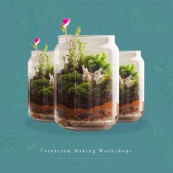 [Anchorpoint] Have you signed up for our Terrarium Making Workshops?