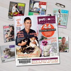[Pet Lovers Centre Singapore] Pick up the latest copy of PLC Magazine, where we're running giveaways for Biti Dog food, Rufus and Coco