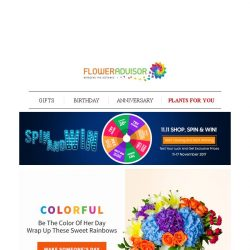 [Floweradvisor] Color Up Her Day with These Colorful Bloom Selections!