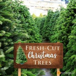 [Far East Flora] There is still time to get a fresh-cut Christmas tree for the holidays!